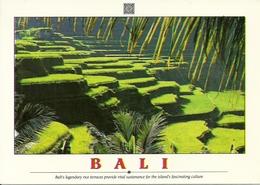 Bali (Indonesia) Rice Terraces, Terrazzamenti Per Coltivazione Riso - Indonesia
