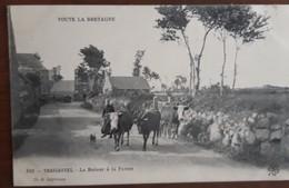 TREGASTEL Le Retour à La Ferme  (Cliché Lespinasse) Bretonne Ramenant Ses Vaches - Trégastel