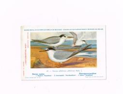 Sterne Naine.Expédié De Ciney à Arlon.Antigrippine Midy - Oiseaux