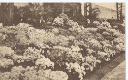 Gent - Gand - Floralies Gantoises 1938 - Gentsche Floraliën - Ed. T. De Graeve - Gent