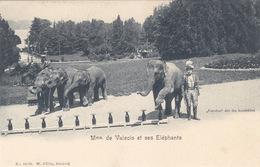 Mme De Valsois Et Ses Eléphants        (A-85-160915) - Éléphants
