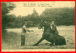 Kamp Van Beverloo - Het Afgericht Paard - Chevaux