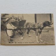 Attelage De Laitière Flamande - Envoyée En 1916 Par Soldat Allemand - Marchands Ambulants