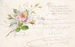 AK Rose Mit Gedicht - 1909 (41884) - Blumen