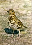 England & Circulated,  Song Thrush, Turdus Philomelos,  J. Arthur Dixon,  London, Burford 1972 (6450) - Oiseaux