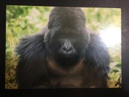 Gorila - Monos