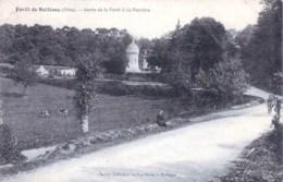 61 - Foret De Belleme  ( Orne ) Sortie De La Foret A La Perriere - France
