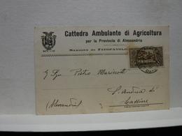 ALESSANDRIA   -- VINO -UVA - DISTILLERIA  -- ACCESSORI  ---  CATTEDRA AMBULANTE DI AGRICOLTURA - Vigne