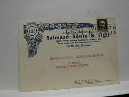 SAONARA  -PADOVA -- VINO -UVA - DISTILLERIA  -- ACCESSORI  --SALMASO SANTE & FIGLI -- VITI - VIVAI - Vigne