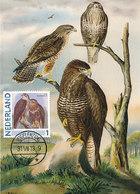 D37434 CARTE MAXIMUM CARD 2013 NETHERLANDS - COMMON BUZZARD BUSE BUTEO CP ORIGINAL - Arends & Roofvogels