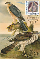 D37436 CARTE MAXIMUM CARD 2013 NETHERLANDS - SPARROWHAWK ACCIPTER CP ORIGINAL - Arends & Roofvogels