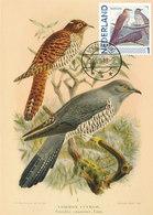 D37452 CARTE MAXIMUM CARD 2013 NETHERLANDS - COMMON CUCKOO CUCULUS CANORUS CP ORIGINAL - Cuckoos & Turacos