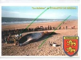 BREHAL-SAINT MARTIN DE BREHAL LA BALEINE ECHOUEE ET DYNAMITEE EN 1999 - France