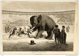 L'éléphant Pizzaro Et Les Taureaux à Madrid - Elefant Und Kampfstier - Page Original  1871 - Historical Documents
