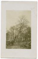 ENGLAND : ASH TREE BEING FELLED, 1910 (PRESTON / LIVERPOOL??) / ADDRESS - PRESTON, HAIGHTON / POSTMARK - LIVERPOOL EXCH. - Trees