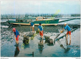 33. Bassin D'ARCACHON . Travux Ostréicoles . Ramassage Des Huitres Dans Les Parcs . - Arcachon