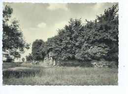 Nechin Ruines Du Château Féodal De La Royère - Estaimpuis