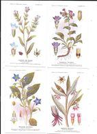 11182 - Lot De 32  CPA Planches Numérotées, Et Enveloppes,Etablissements FUMOUZE, - Medicinal Plants