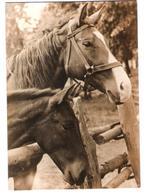Germany - Horse - Horses - Pferde - Cheval - Pferd - Cavallo - Cavalo - Caballo - Cavalli