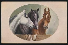 Chevaux  Paard - Cavalli