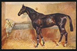 Chevaux  Paard - Chevaux