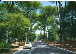 LIDO DI ROMA - Pineta Di Castelfusano - Parks & Gardens