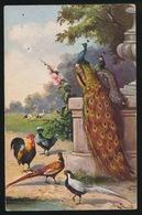 Haan Fazant - Vögel
