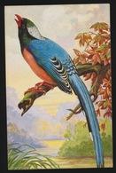 ZIE AFBEELDING - Oiseaux