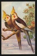 ZIE AFBEELDING - Vögel