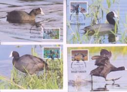 WWF - ANTIGUA - 2009 - WWF - CARIBBEAN COOT   SET  OF 4 MAXI CARDS, - Maximum Cards