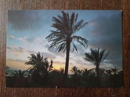 L21/698 Bahrain . Sunset West Coast. Timbres Oblitérés Au Dos - Bahrain