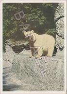 Ours Polaire - Parc Zoologique De Münich - Lions