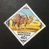 ◆◆◆Mongolia  1978   Bactrian Camels      40M   USED   AA3641 - Mongolia