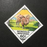 ◆◆◆Mongolia  1978   Bactrian Camels      60M   USED   AA3643 - Mongolia