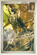 India  2005 Eagle Birds Of Prey Jodhpur Special Cancellation Card  # 18736   D  Inde Indien - Arends & Roofvogels