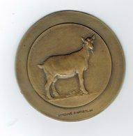 Médaille, épreuve D'artiste,Chèvre,J.Witterwulghe - Belgium