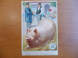 CPA - Aliments Champion Pour Porcs, Valent Leur Pesant D'or - SMG Sélections Maxima Gembloux - Publicité