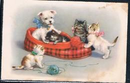 Chats Et Chien  -cats Dog- Poes Hond -katzen Hunde - Gatti