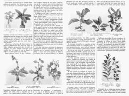 LES EMPHYTOGENES   1901 - Garden