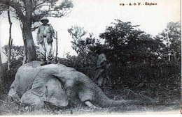 AFRIQUE OCCIDENTALE FRANCAISE - Chasse à L' ELEPHANT - PHOTO LAUROY - Cartes Postales