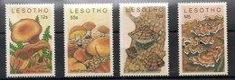 Serie De Lesotho N ºYvert 652/55 ** SETAS (MUSHROOMS) - Lesotho (1966-...)