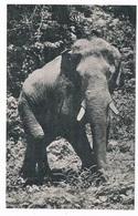 OLI-1   Card With An ELEPHANT - Éléphants