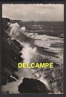 DF / 29 FINISTÈRE / CLÉDEN-CAP-SIZUN / POINTE DU VAN  --  VUE SUR LA POINTE DU RAZ / 1951 - Cléden-Cap-Sizun