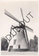 TIEGEM / ANZEGEM  Molen / Moulin - Originele Foto Jaren '70 A.Carre (Q83) - Anzegem