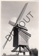 ANZEGEM  Molen / Moulin - Originele Foto Jaren '70 A.Carre (Q53) - Anzegem