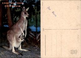 AUSTRALIA POSTCARD - Ohne Zuordnung
