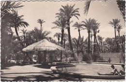 Gf. ELCHE. Huerto Del Cura. Camping 'Palmeral'. Piscina. 30 - Alicante