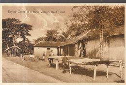 Drying Cocoa A Bush Village , Gold Coast    ///   REF  JUIN .19  / N° 8936 - Autres
