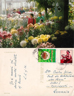 SHENYANG : CHRYSANTHEMUM SHOW - CARTE POSTALE VOYAGÉE à BUCAREST / ROMANIA Avec TIMBRE De CHINE / CHINA STAMP (ac479) - Storia Postale