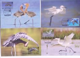 WWF - MONTSERRAT  -2010  - WWF - REDDISH EGRET  SET  OF 4 MAXI CARDS, - Cartoline Maximum
